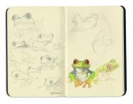 Frogs-n-Cat