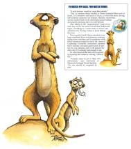 Meerkat-Comp