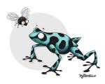 Frog_poison dart